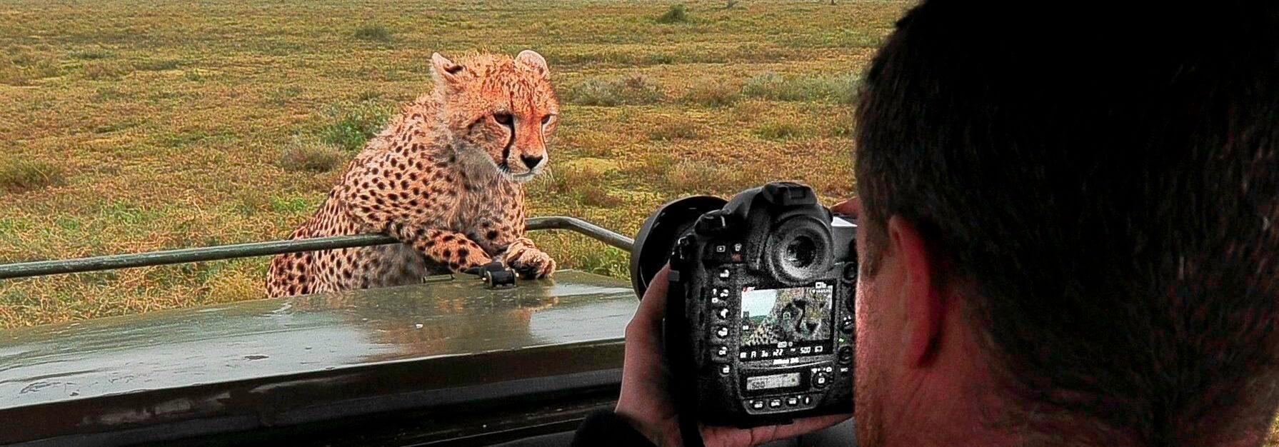 Tanzania safari and Zanzibar Cheetah cub Serengeti Tanzania