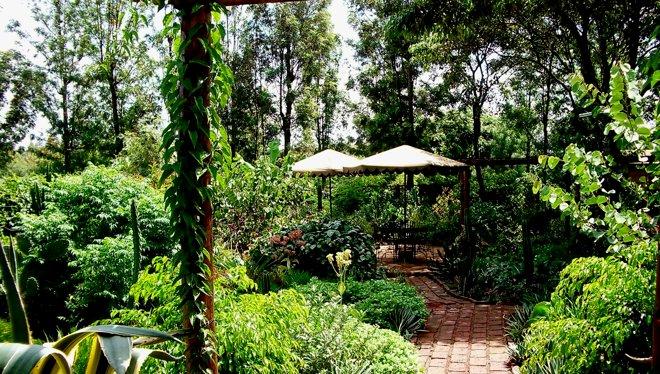 Octagob Lodge garden