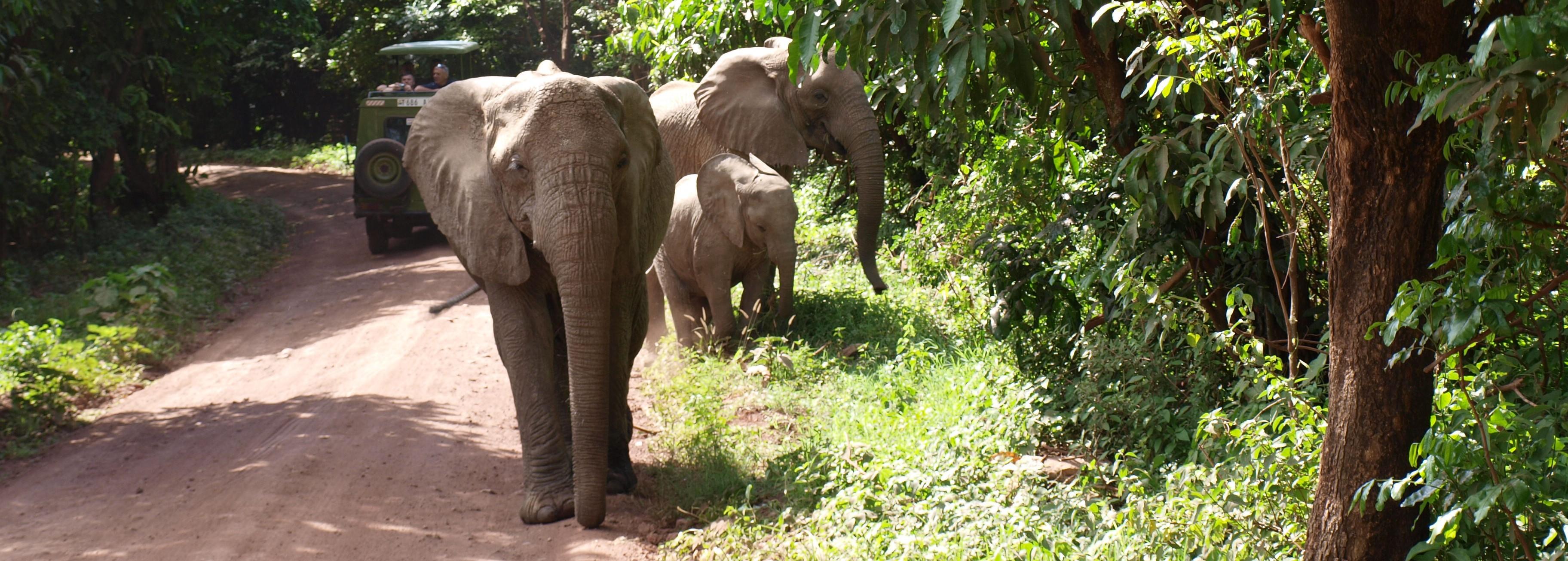 elephants by jeep in lake manyara