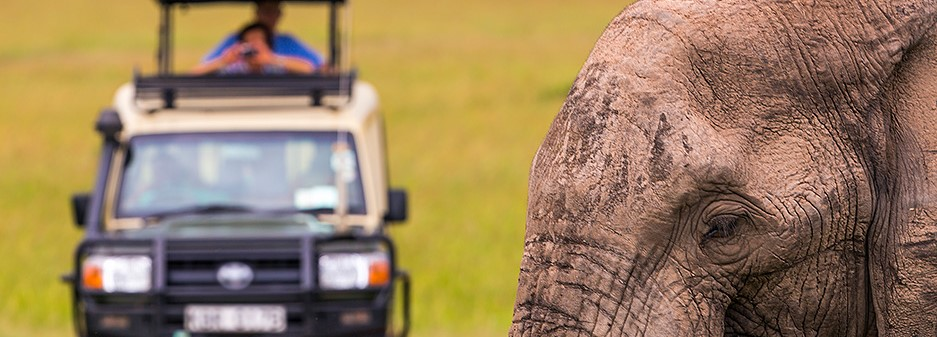 elephant selous