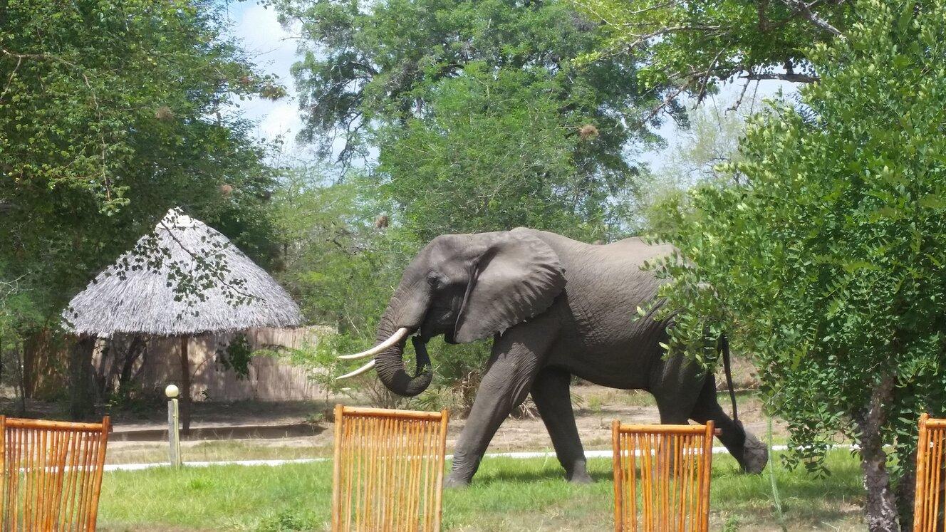 Elephant at Africa Safari Camp