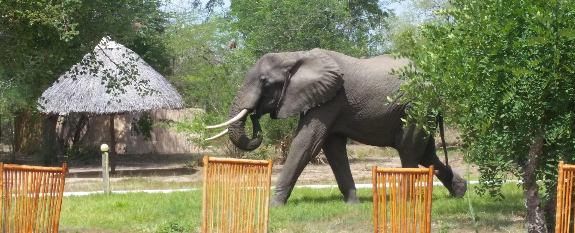 Elephant Selous Game Reserve