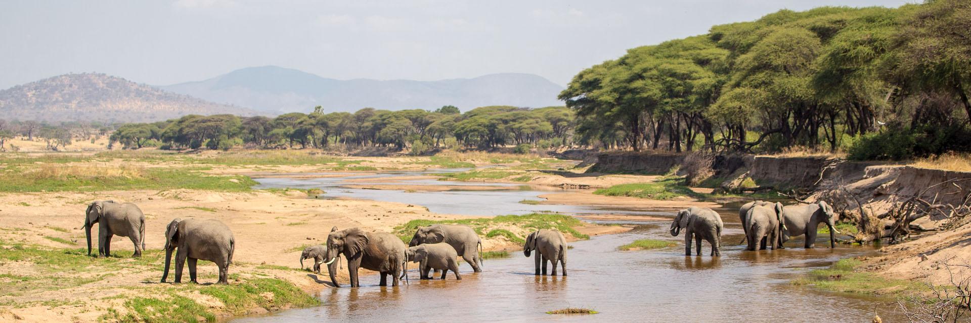 Elephants in Ruaha
